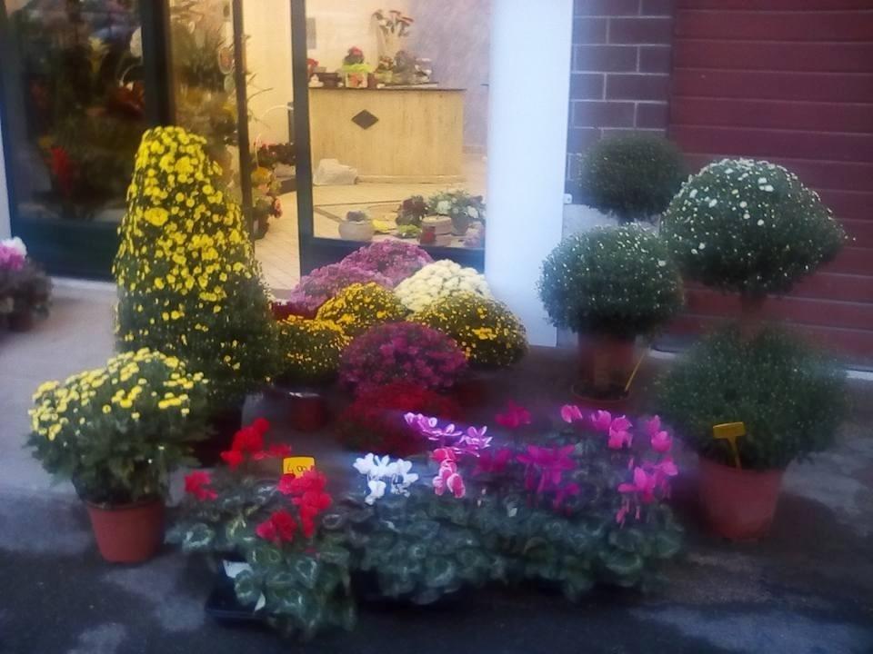 vista angolare di piante di fiori