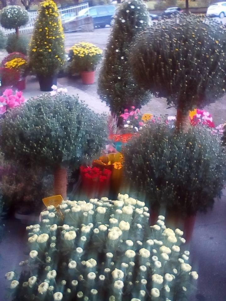 piante di fiori