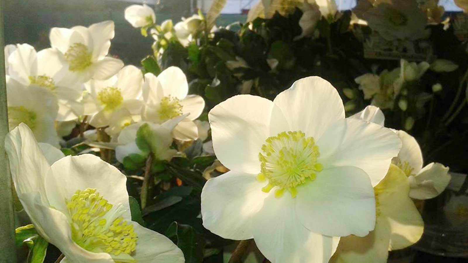 giardinaggio fiori e piante a PADOVA