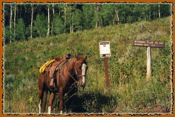 Bridger - Teton National Forest in Western Wyoming guide