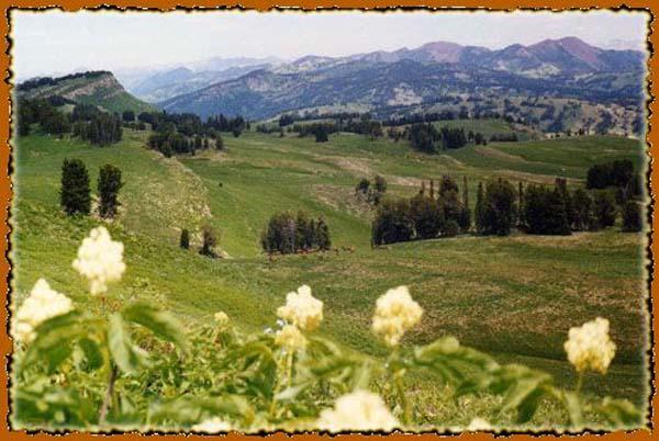 Bridger - Teton National Forest in Western Wyoming on horse back