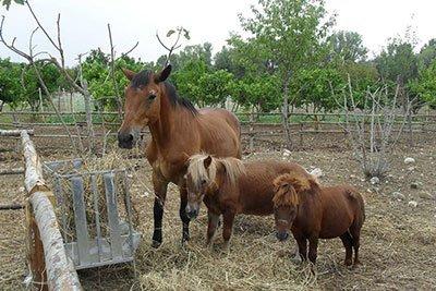 Cavalli all'agriturismo Cip e Ciop in Postiglione