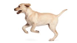 toelettature per animali