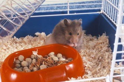 Small pet care Colchester