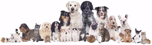 Pet Care Colchester