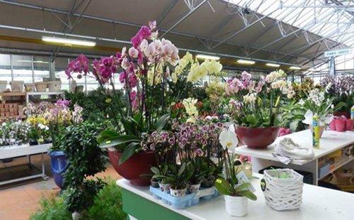 allestimento piante negozio