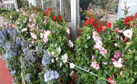 fiore-aree verdi