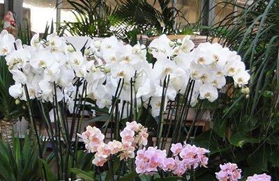 vasi con piante bianche