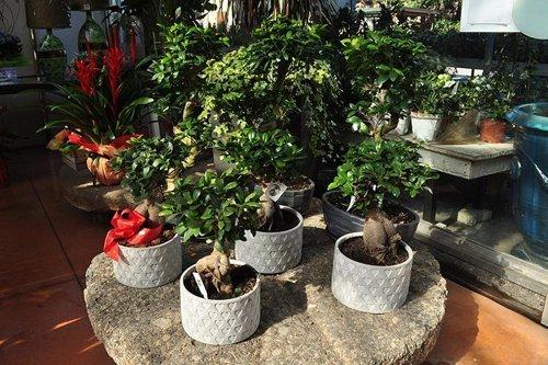 piante con vasi