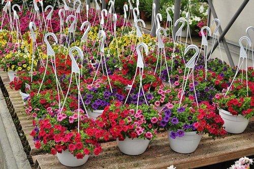 vasi di fiori con gancio