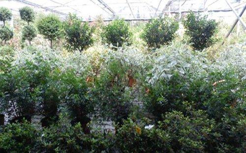 vasto assortimento di piante