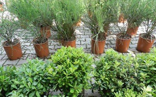 vivai piante