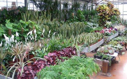 assortimento piante e fiori
