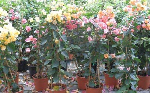 assortimento piante da giardino
