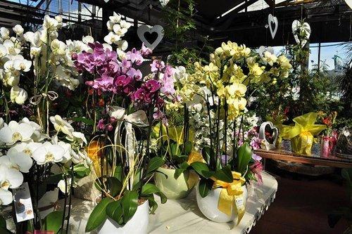 piante colorate per eventi speciali