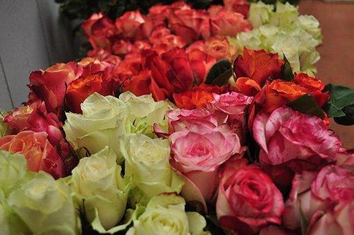 assortimento rose di diversi colori