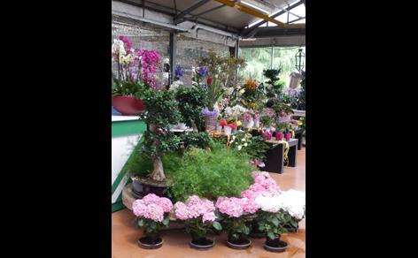assortimento piante e vivai