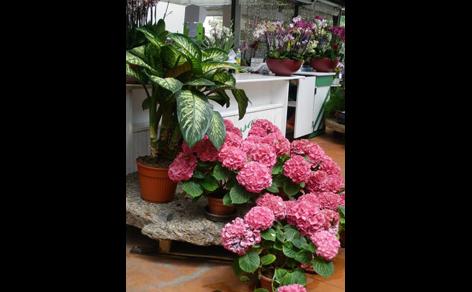 piante stagionali in un vivaio
