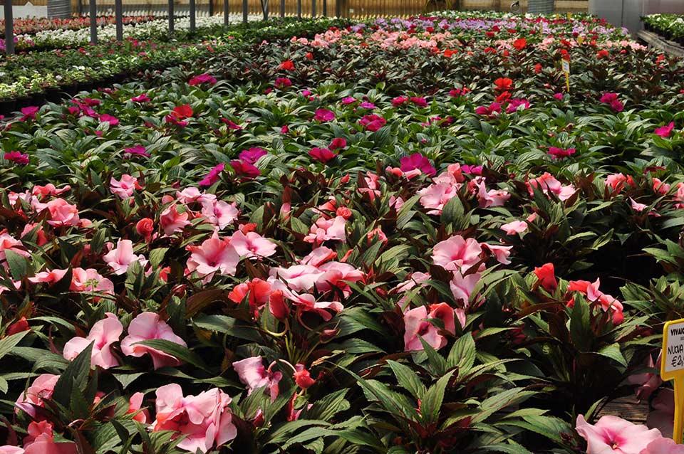 serra di fiori e piante
