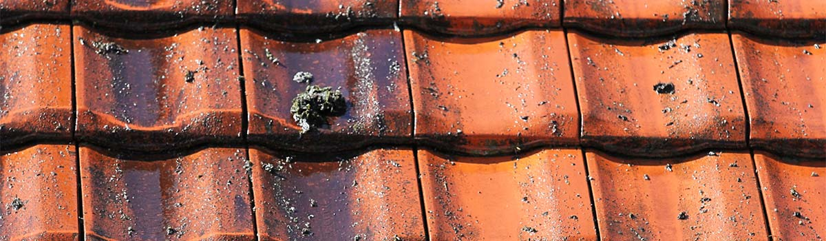 roof cleaning specialists of Melbourne