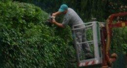 Potatura siepi e piante con cestello elevatore