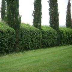 Realizzazione di siepi e manutenzione di aree verdi