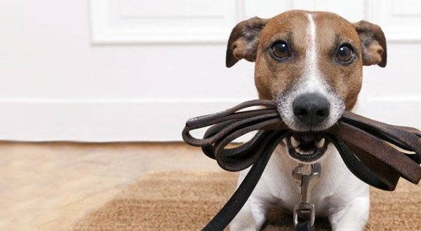 vendita Accessori per cani e gatti