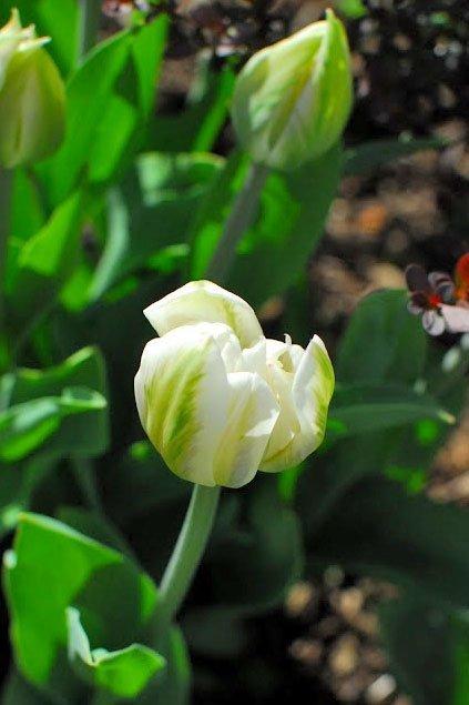 Gardening in spring toowoomba the springs garden world spring flowers mightylinksfo