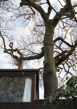 Your local Professional Arborist servicing the greater Dunedin area