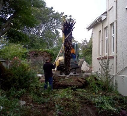 Tree removal in Waitati