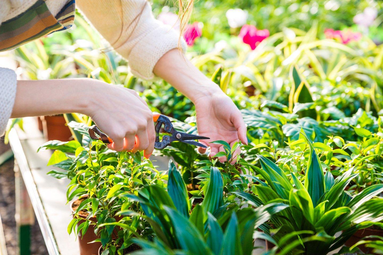 Potatura delle piante a Cuneo