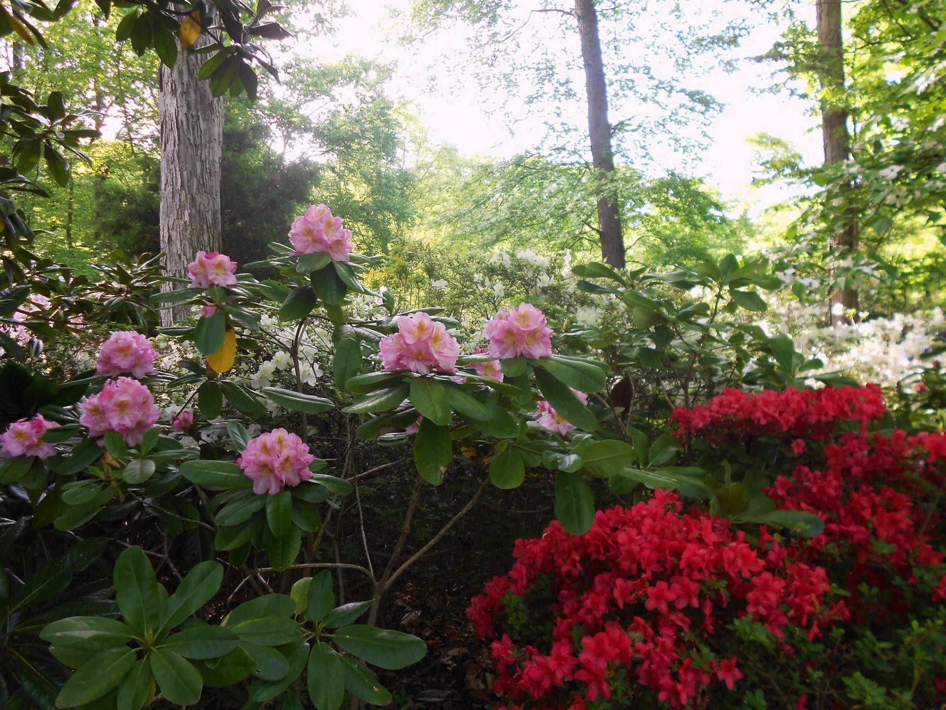 Mirta Martin's garden in Virginia