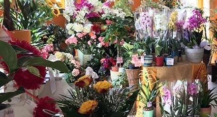 negozio piante e fiori