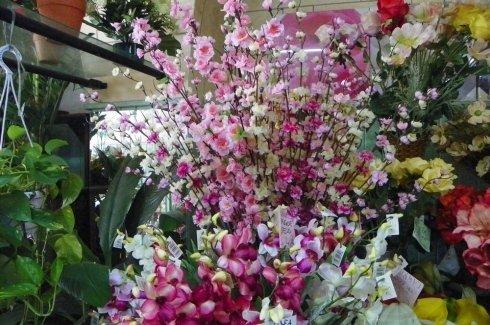 piante ornamentali di colore lilla
