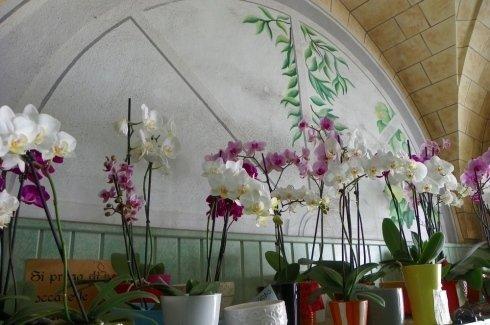 orchidee bianche e viola