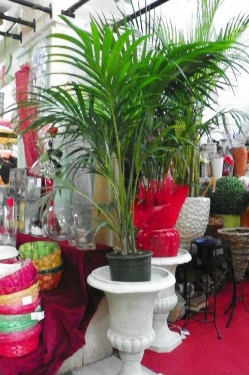 vendita di piante da interno