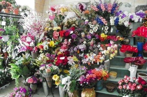 alcune di piante e fiori esposti nel negozio