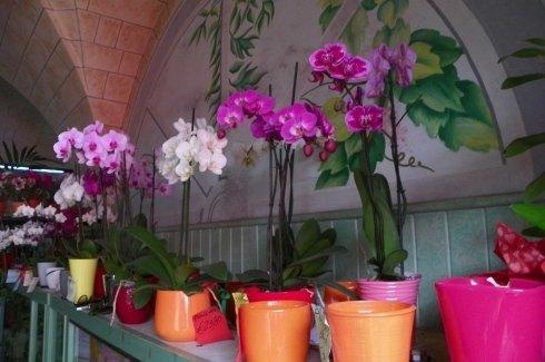 diverse orchidee di color viola, lilla e rosa