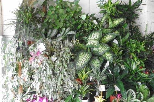 alcune tipologie di piante ornamentali