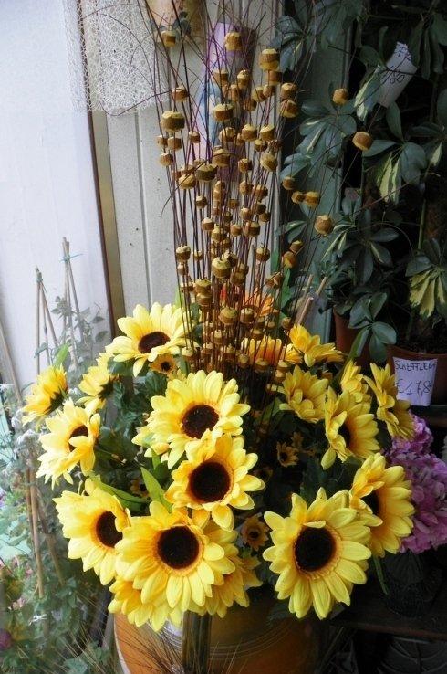 vendita di piante di girasoli