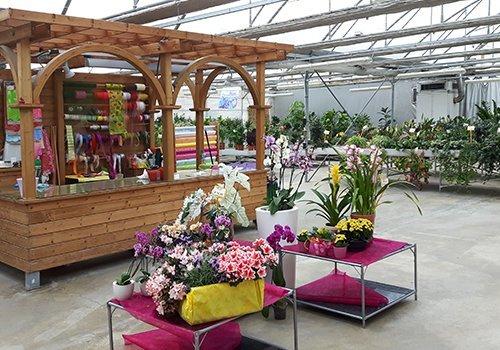 Fiori e piante verdi per regalo y per la casa