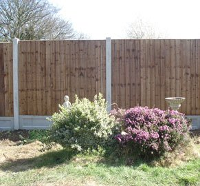 Garden shrubs in front of a timber fence