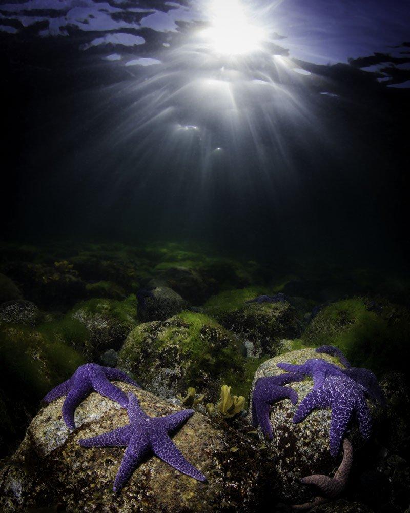 Seastar Light by Eiko Jones - Photography