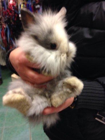 due mani che tengono in braccio un coniglietto