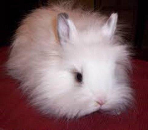 un coniglio bianco