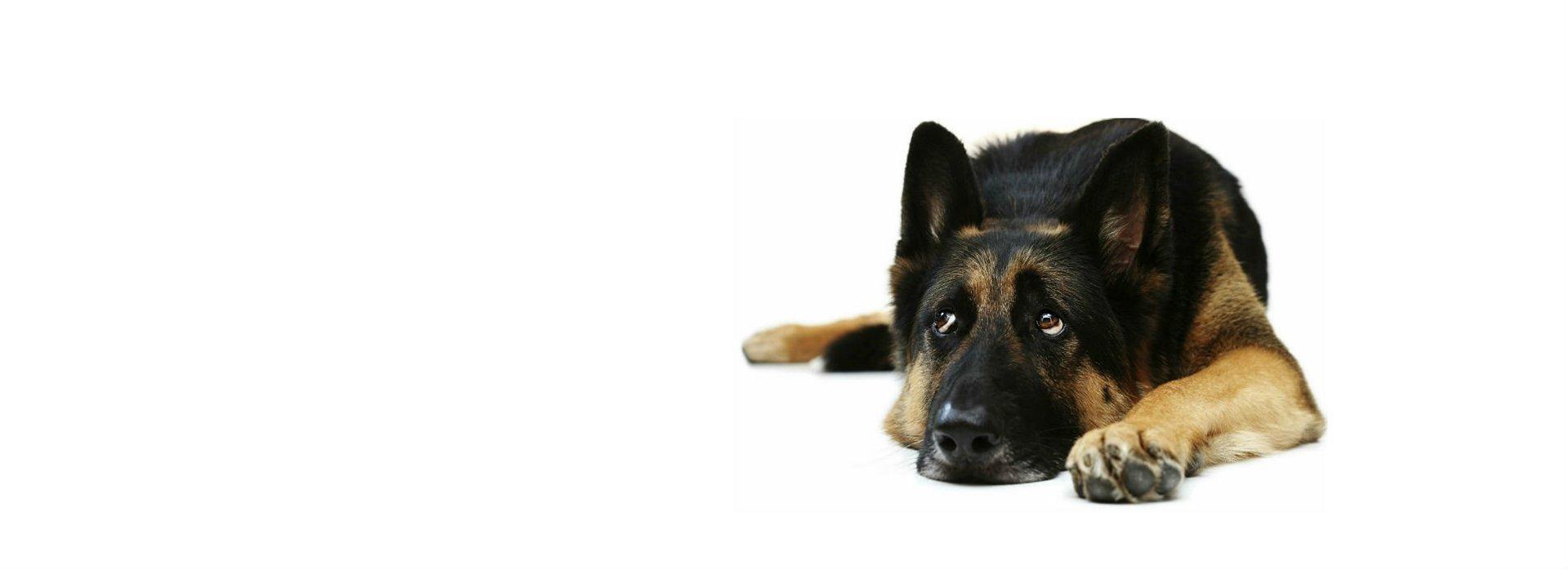 Dog Walking Services Denver Colorado