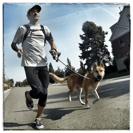 Dog walking and dog running services