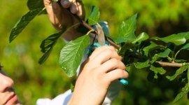 potatura rami, manutenzione piante, albero