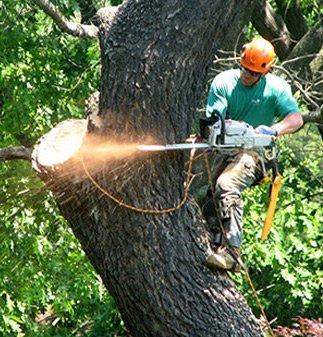 tree-maintenance