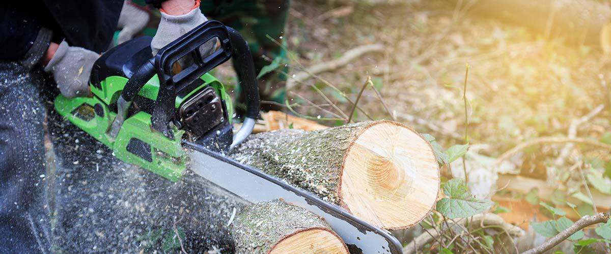 chainsaw-log